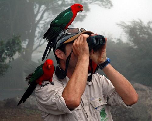 Какой бинокль выбрать для наблюдений за птицами, какой лучше приближает 2
