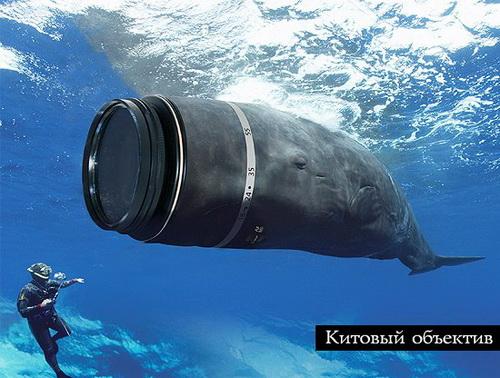 """Что такое """"китовый"""" объектив и как применяется в съемке 3"""