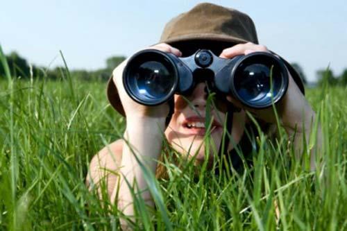 Какой бинокль выбрать для наблюдений за птицами, какой лучше приближает 3