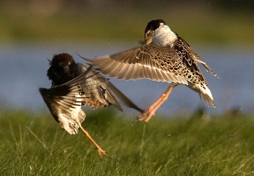 Какой бинокль выбрать для наблюдений за птицами, какой лучше приближает 5